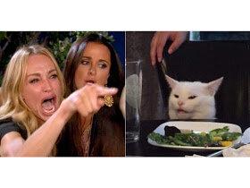 meme-gatto-donna.jpeg